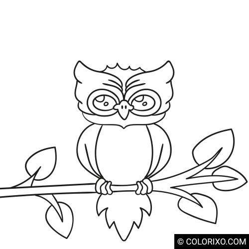 Omalovánky: Moudrá sova